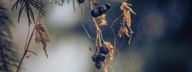 Giardino_piante